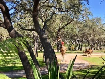 Animal Kingdom Lodge - Jambo House